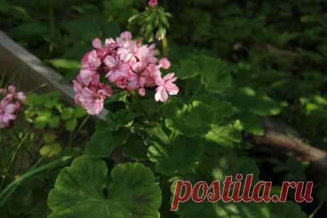 Сладкая подкормка: важная процедура для комнатных растений в холода - Садоводка