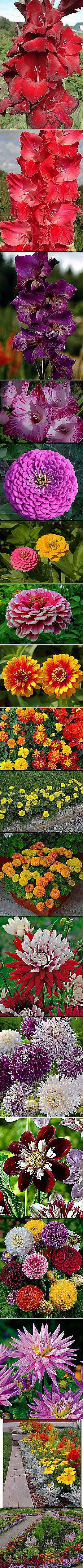 Зоя Винниченко: Цветы садовые | Постила