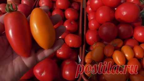 Сорта томатов долгого хранения 😉