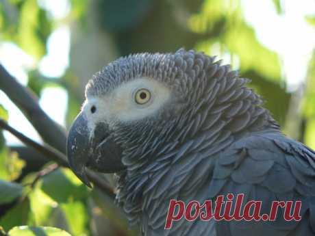 Птицам наконец-то дают право голоса: впервые в истории судебной практики США на суде может выступить говорящий попугай.