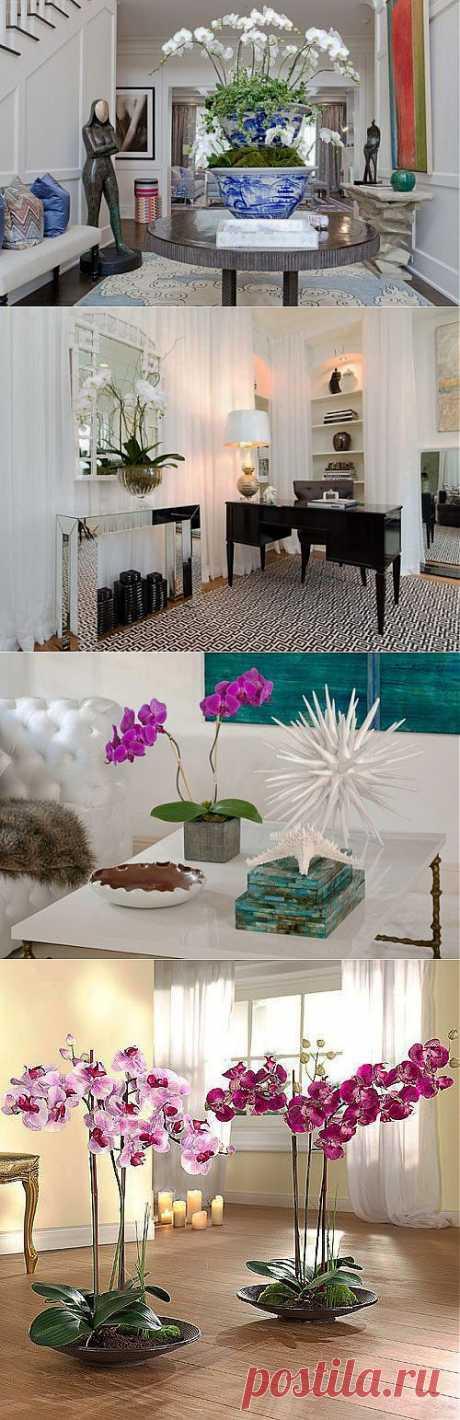 Орхидея в вашем доме / Все для женщины