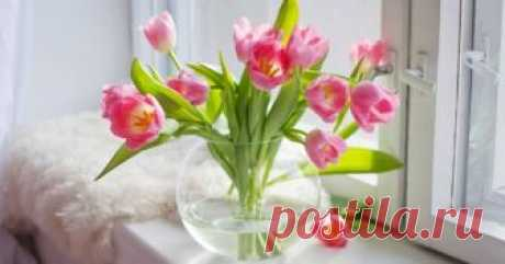 Как дольше сохранить срезанные тюльпаны в домашних условиях Весенние яркие тюльпаны – украшение любого праздника. Однако зачастую эти хрупкие цветы, будучи принесенными домой, даже не дожидаются торжества и начинают увядать прямо на глазах. Да и в вазе они обычно живут совсем недолго, опуская головки и теряя лепестки.