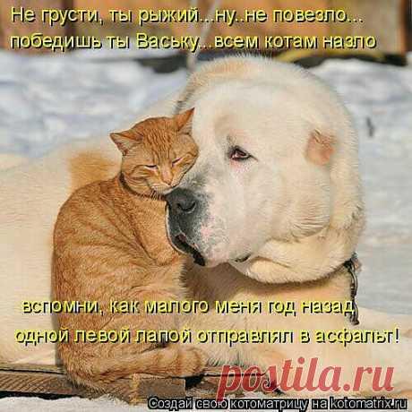 верные друзья