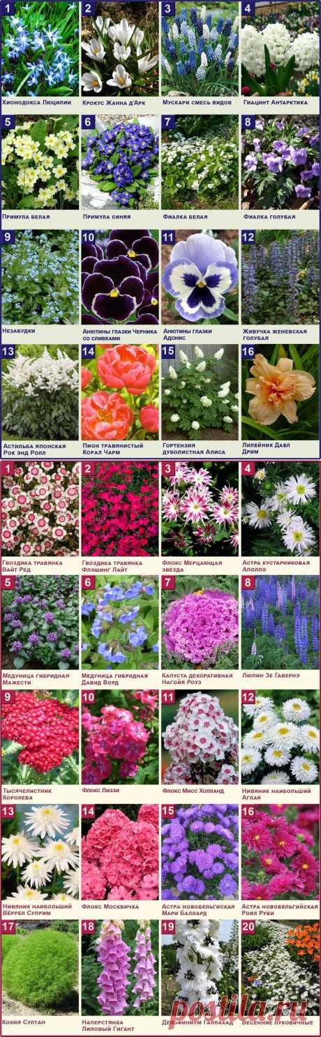 Цветник своими руками  - Растения в Вашем саду - Интернет магазин Садовый каталог