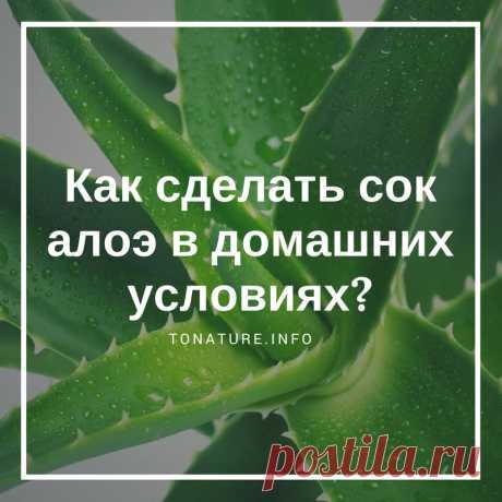 КАК СДЕЛАТЬ СОК АЛОЭ В ДОМАШНИХ УСЛОВИЯХ?  #toNatureInfo #КомнатныеРастения #Растения #Цветы #Алоэ #Суккуленты #СокАлоэ #ВыращиваниеАлоэ #АлоэДома #ЛечебноеАлоэ #ПолезныеСвойстваАлоэ