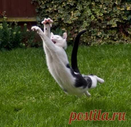 11 фотографий кошек в действии | Тайная жизнь вашего кота | Яндекс Дзен