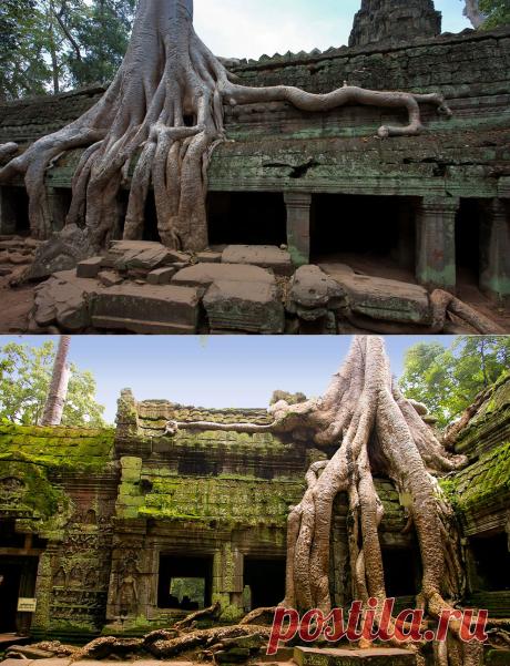 Трудно передаваемые впечатления! Камбоджийский храм Та Пром в объективе Дмитрия Даркина | Фотоискусство