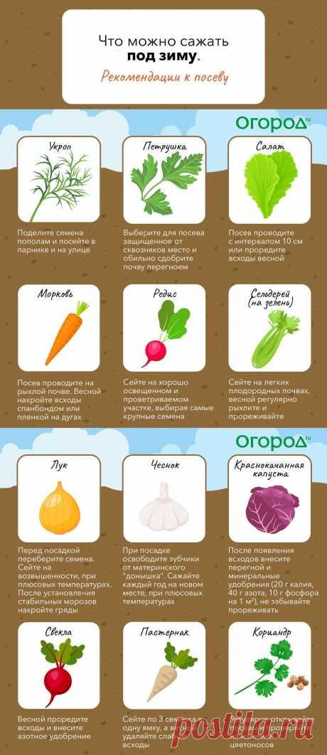 Что можно сажать под зиму (рекомендации к посеву)