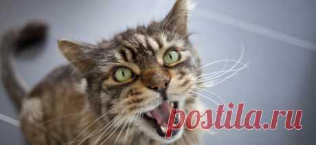 Кошка кричит по ночам и не даёт спать | PetTips
