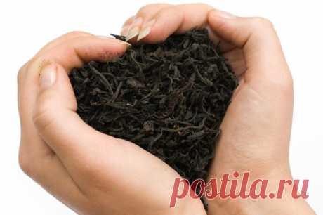 Черный чай: польза и вред | Чайная правда