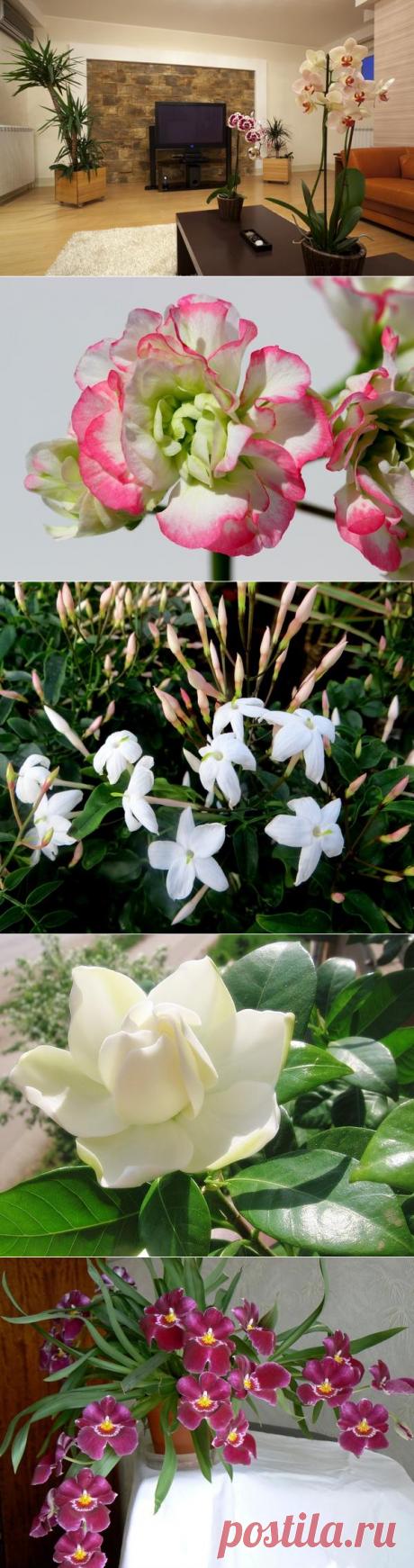 10 самых популярных растений для гостиной