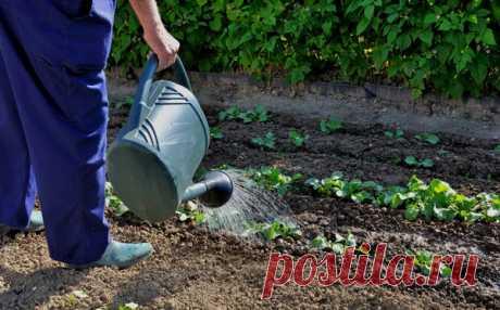 Применение пищевой соды против болезней растений | Сад, дом, огород | Яндекс Дзен