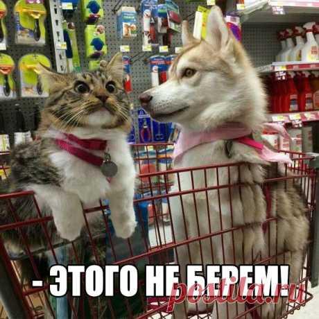 Одним своим видом поднимают настроение))