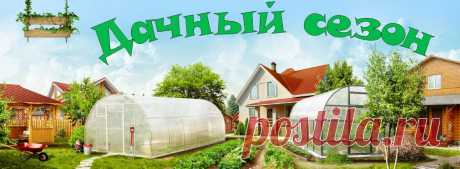 How to grow up cucumbers: secret of a good harvest