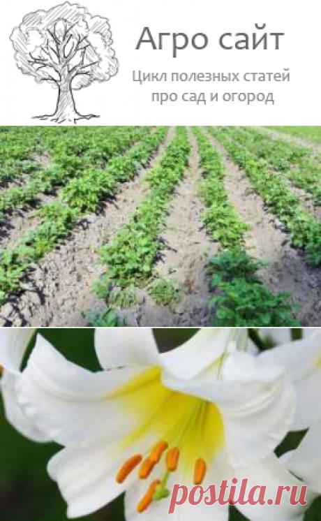 В Архангельской области выведено 3 новых сорта картофеля