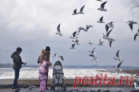 Чайка (Стих) Просит чайка корм из рукИ над палубой кружится.Описав над нами кругИщет, где бы приземлиться.Она может на летуКлювом хлеб забрать с ладони.Набирая высотуВниз ни крошки не уронит.Дети радуются ейИ прив...