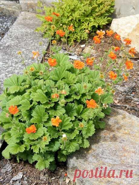 Самые лучшие низкорослые растения | Школа Цветоводства | Яндекс Дзен