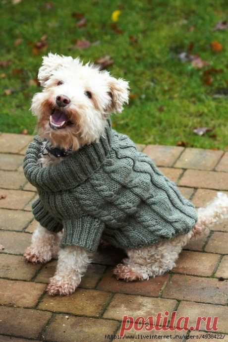 Sweater for a dog spokes — HandMade