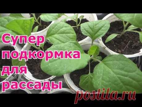 La mejor fertilización para las plantas por las manos