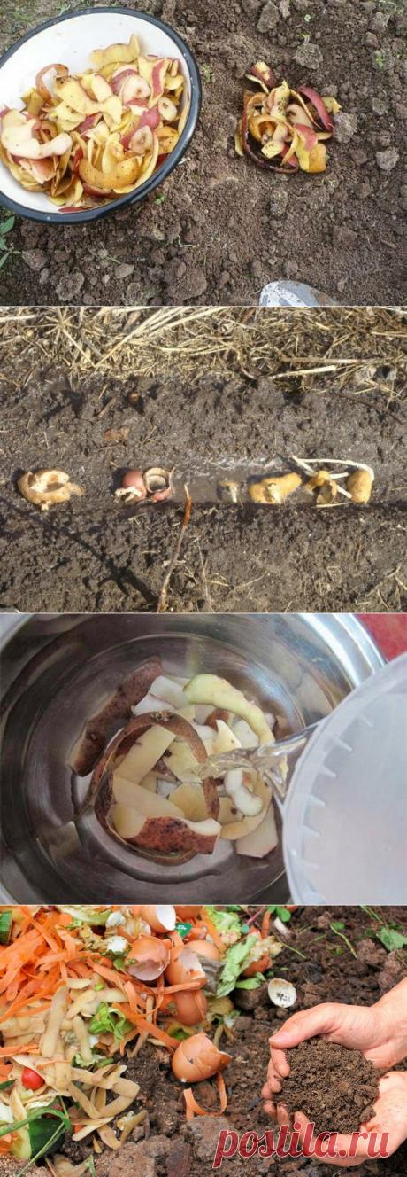Подкормка картофельными очистками - дешево и эффективно!
