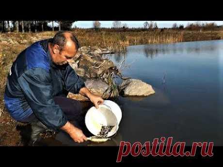 Зарыбление Пруда Верхоплавкой своими руками. Путина в рыбхозе. Запуск и вылов рыбы - YouTube