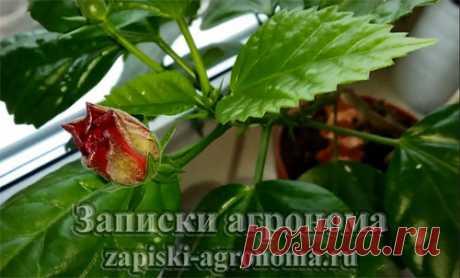 Правила ухода за комнатными растениями • zapiski-agronoma.ru