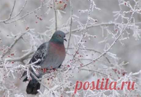 Так начинается зима... Фигурным росчерком метели, Холодным цветом акварели, Прозрачно-снежной дымкой сна –  Так начинается зима... Снежинкой, на ладонь упавшей, Зарей немножечко уставшей, Колдуньей-вьюгой у окна –  Так начинается зима... Теплом уютным у камина, Огнями яркими рябины, Красой, что щедро ей дана,–  Так начинается зима... Пронзительным желаньем ласки, И ожиданьем дивной сказки, И встречи той, что суждена,–  Так начинается зима... Туманным инеем сомнений, Загадк...