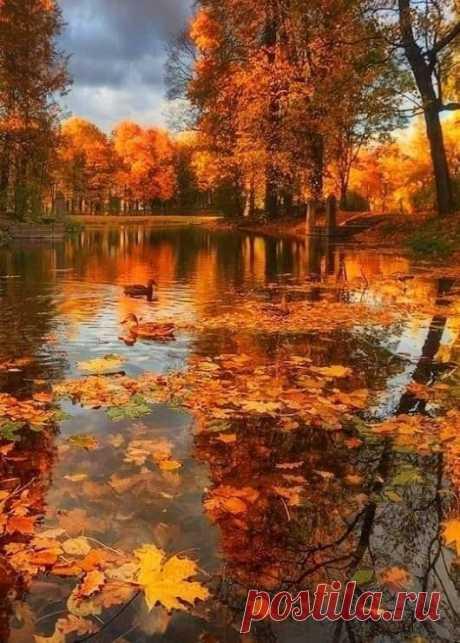 И с каждой ОСЕНЬЮ я расцветаю вновь.... А.Пушкин  Необыкновенная неописуемаякрасота ))) Сказка природы про осень полная тайн красоты! В небе мелькнула просинь... В озере - солнца мечты! В золото роща оделась, листья плывут по воде....В грёзах картина явилась, лучше не видел нигде. Гляжу на тебя равнодушно , А в сердце тоски не уйму .... Сегодня томитьелно душно , Но солнце таится в дыму .