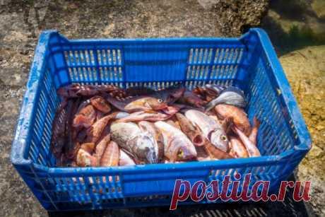 Зачем удобрять грядки рыбой?   6 соток