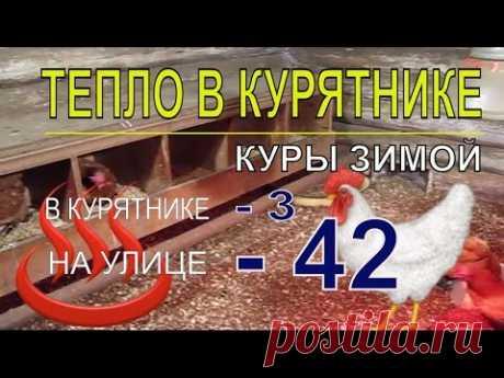 Мороз 42.  В курятнике с курами несушками зимой тепло - YouTube