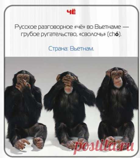 Русские слова, которые за границей превратятся в ругательства | Fresher - Лучшее из Рунета за день