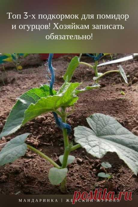#сад #дача #огород #подкормка #дляпомидор #дляогурцов