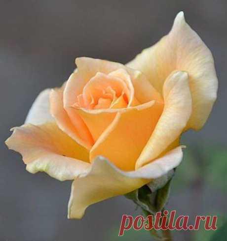Самые разные цветочки из фоамирана: шаблоны