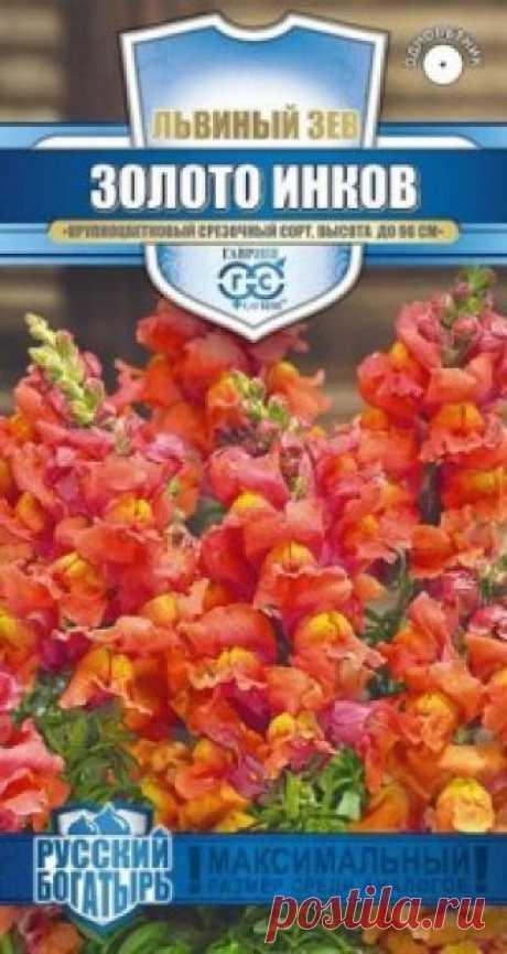 """Семена. Львиный зев """"Золото инков"""" (вес: 0,1 г) Всхожесть: 80%. Великолепный крупноцветковый срезочный сорт. Декоративное растение из семейства Норичниковые, культивируемое как однолетник, высотой 70-90 см. Цветет с конца июня до поздних заморозков. Цветки собраны в кистевидные соцветия золотисто-оранжевой окраски. Холодостоек..."""
