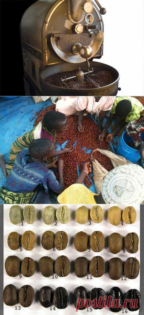 Жарим Кофе: Мы ищем самые лучшие сорта зеленых зерен по всему Миру и обжариваем их специально для вас — от 590р./месяц