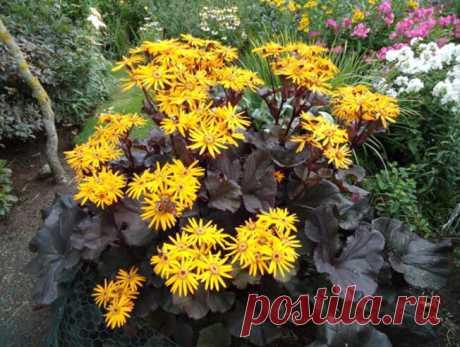 Цветущие многолетники для мрачных углов сада | Растения дома | Яндекс Дзен
