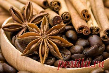 Бадьян: полезные свойства и противопоказания к звездчатому анису, разница с анисом, как выгладит и растет, применение в кулинарии, от кашля и для похудения
