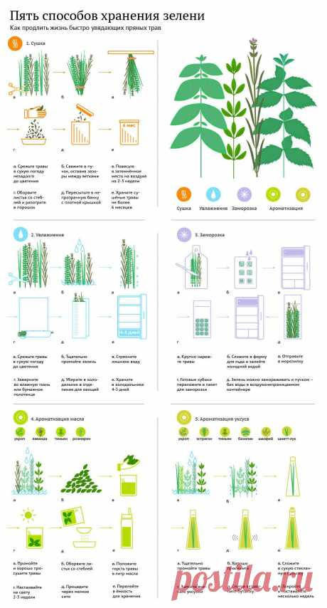Как сохранить и использовать пряную зелень//ОПТИМИСТ
