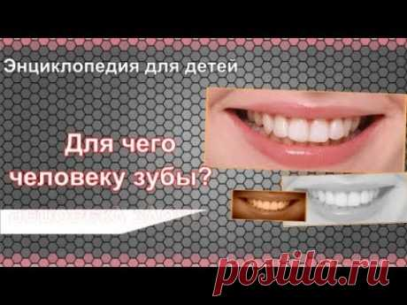Для чего человеку зубы? Энциклопедия для детей - YouTube
