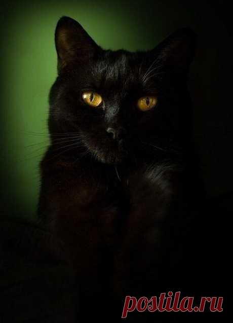 ночь темна....