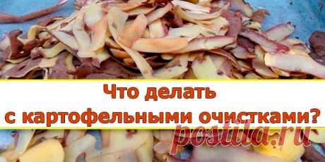 De patatas de la limpieza — el mejor abono para la grosella | los consejos Útiles