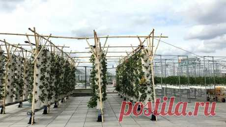 На парижской крыше открылась самая большая в Европе высотная городская ферма