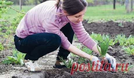 Что полезного посадить диабетику у себя в огороде?   Garden-Zoo.ru   Яндекс Дзен