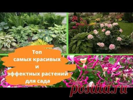 Топ 10 самых красивых и эффектных растений для сада
