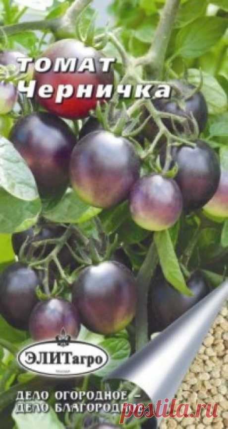"""Семена. Томат """"Черничка"""" (вес: 0,1 г) Всхожесть: 96%. Раннеспелый индетерминантный сорт, созревающий через 105 дней после всходов. Первый томат с плодами насыщенного черного цвета! Коктейльные плоды массой по 35-50 грамм каждый имеют приятный аромат и сливовое послевкусие. Их темная кожица богата мощными антиоксидантами -..."""