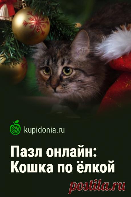 Пазл онлайн: Кошка по ёлкой. Думаешь чем развлечься на Новый год? Красивый новогодний пазл онлайн с пушистой кошкой под ёлкой. Собери пазл на сайте!