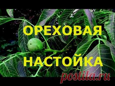 Ореховая настойка Настойка из зеленых грецких орехов источник органического еда