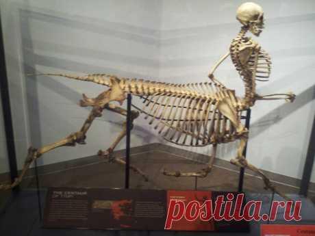 Вы такого никогда не видели -- 12 редчайших музейных экспонатов, существующих в одном экземпляре!    Многие экспонаты музеев существуют в единственном экземпляре, и мы хотим показать вам хотя бы малую часть из них: к примеру, зуб мегалодона, застрявший в позвонке кита, парик возрастом примерно 3,5…
