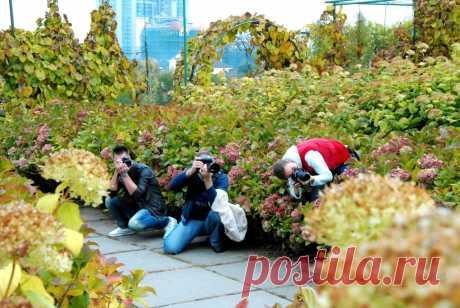 Фотоохотники