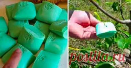 Ha atado el jabón en los saquitos y los ha suspendido en el jardín... ¡El Resultado ha alegrado inmediatamente!